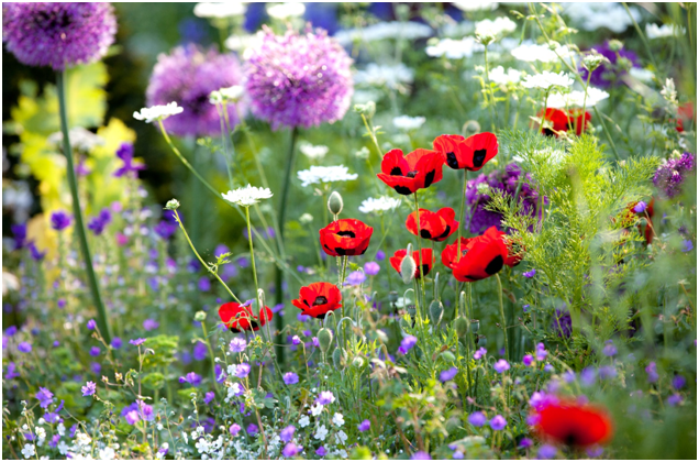 5 Top Tips For Creating the Perfect Garden