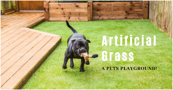 Artificial Grass - A Pets Playground!