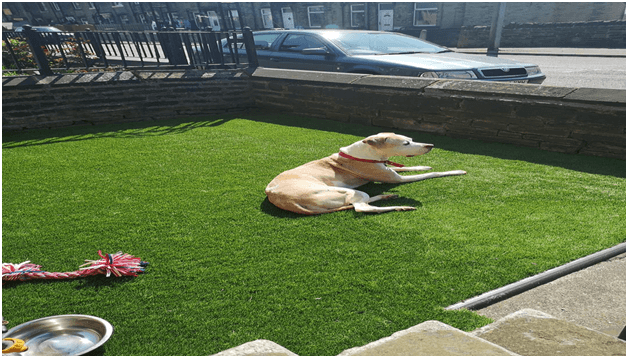 How Artificial Grass Buying isn't as Difficult as You Think?